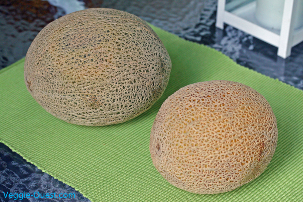 Cantaloupe comparison