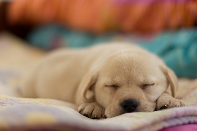 Our puppy Image by George Chelebiev via Flickr